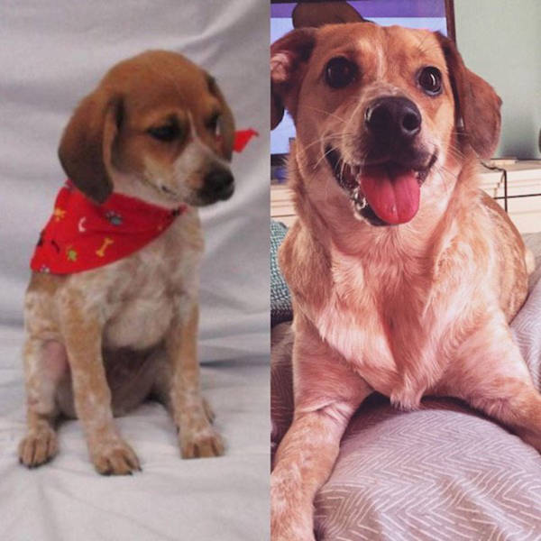 The Difference Between Animals Before And After They Were Adopted Is Something Everyone Should See