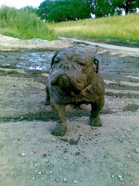 This Is Why Dogs Shouldn't Go Nowhere Near Any Mud. Or Should