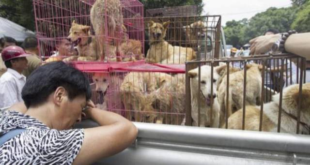 Finally, There Will Be No More Dog Meat At China's Biggest Dog-Eating Festival!