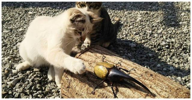 The Metamorphoses Of Hercules Beetle Are Really Mind-Blowing