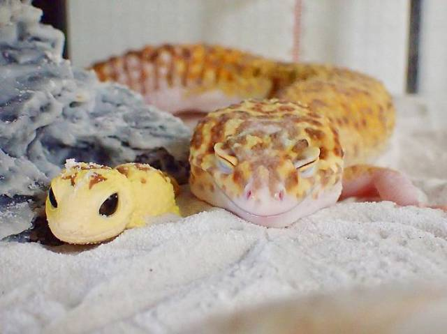 This Gecko Friendship Is An Example For All The Friends Out There