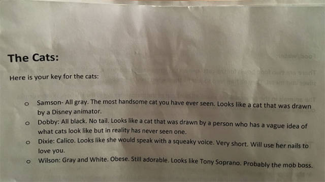 This Cat-Sitter Received The Most Accurate And Cute Instructions Possible