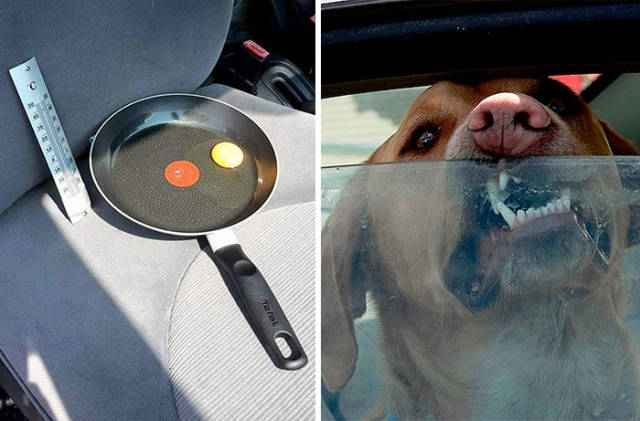 This Is Why You Should NEVER Leave Your Dog In Your Car While It's Hot Outside!