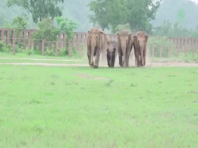 Elephants Could Certainly Teach Us A Thing Or Two About Love And Friendship