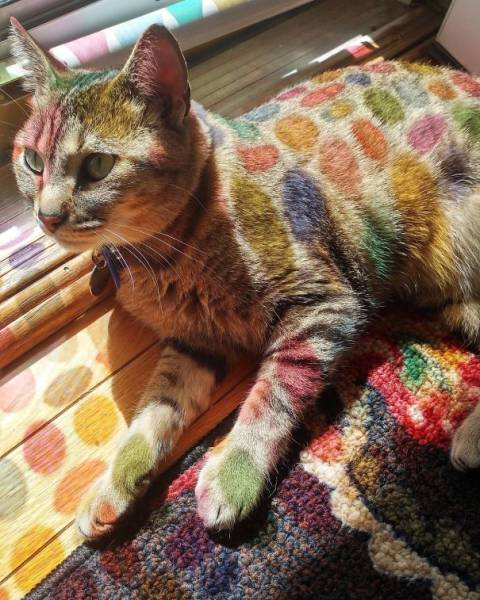 The Only Thing Cats Love More Than Satan Is The Sun