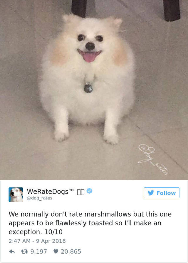 This Twitter Account Rates Dogs… But People Always Manage To Fail With Sending Them Dog Pics…