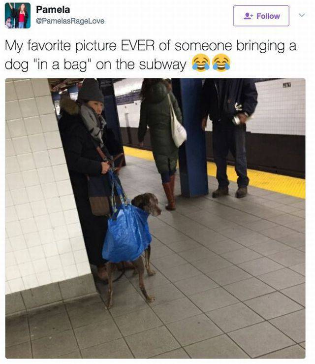 Dogs Are Not Allowed In NYC Subways Anymore… But People Don't Care