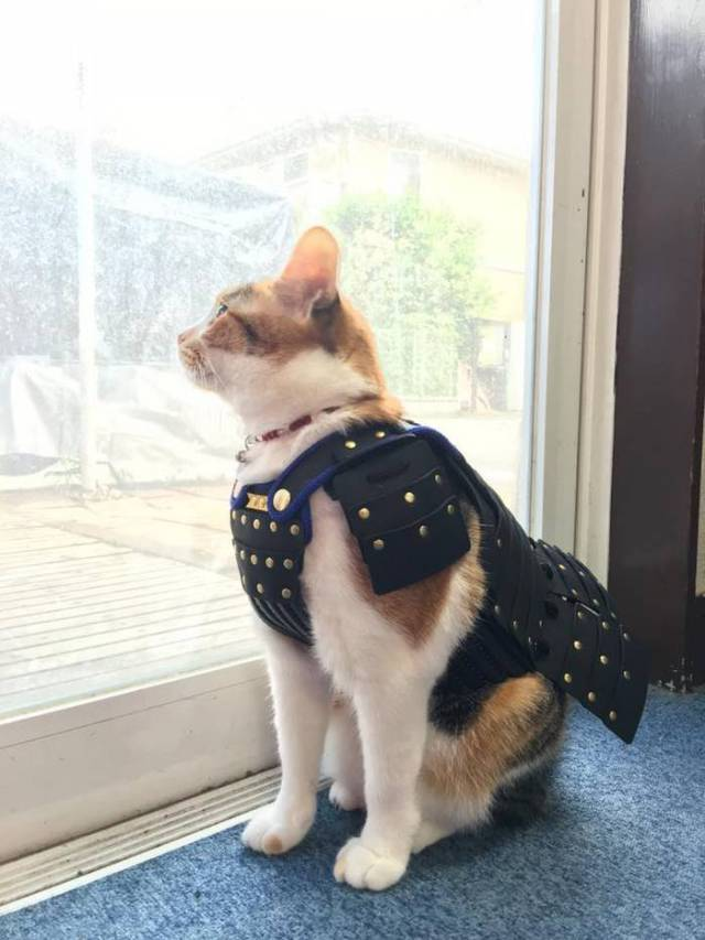 Yes, This Is Samurai Armor For Dogs And Cats – Now You Have Seen Everything