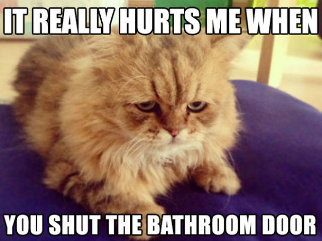 Cats Have Serious Problems Too, And We Have To Acknowledge Them!