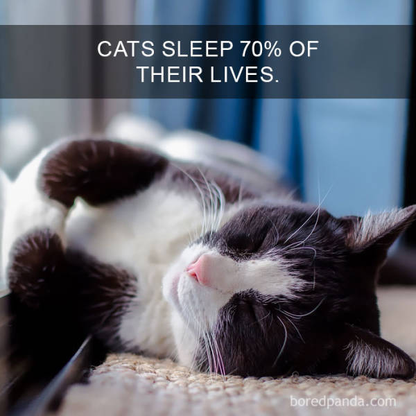 Cats Are So Interesting – There Are Even Facts About Them