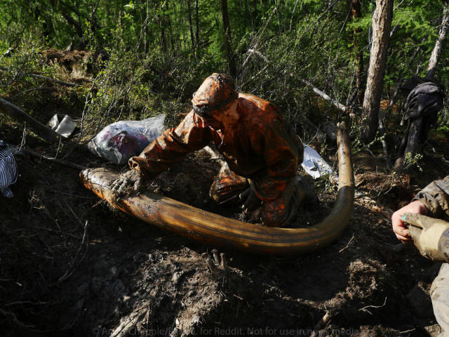 An Epic Adventure Of Illegal Search For Mammoth Tusks In Russia