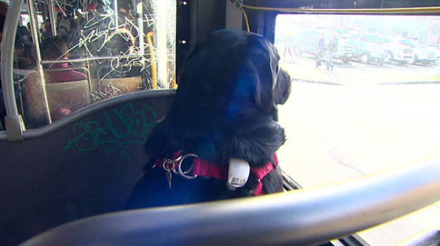 This Smart Doggie Doesn't Need Anyone To Ride To Her Favorite Park!
