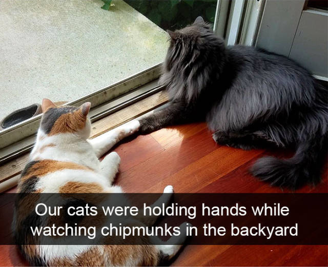 Cats Make The Best Snapchats Possible