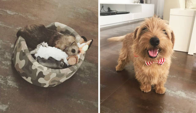 Grown Up Dogs Seem To Be Completely Different Than They Were As Puppies
