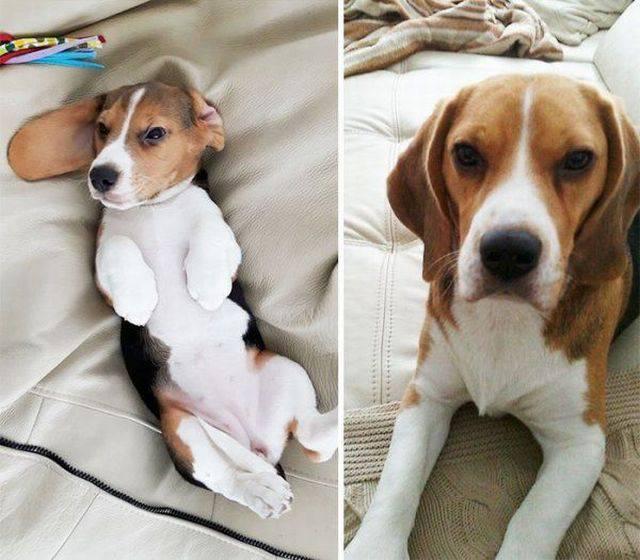 18 Perros y su gran evolucion!