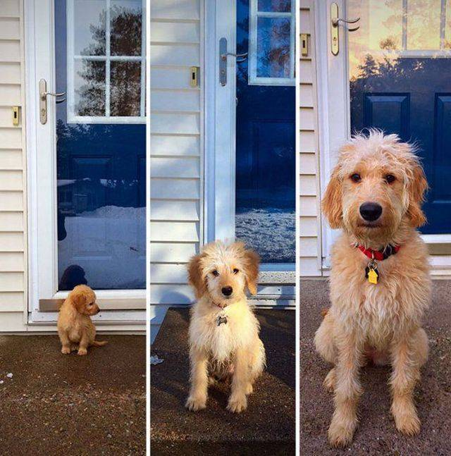 Dogs Grow And Their Cuteness Grows With Them