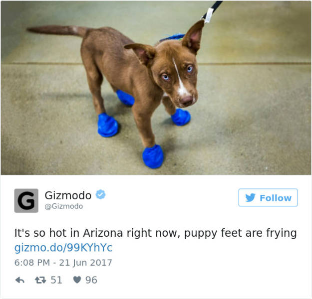 Arizona Is Frying And Melting Literally 13 Pics