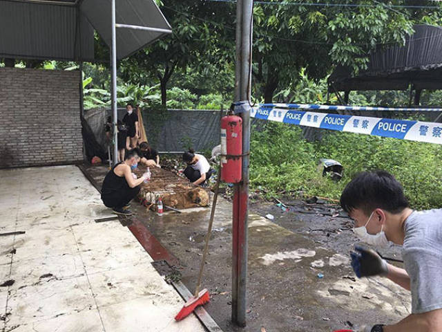 More Than 1000 Dogs Were Saved From Certain Death By Chinese Animal Rights Activists!