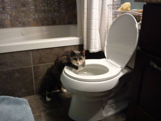 These Pets Were Caught In The Act But They Regret Nothing