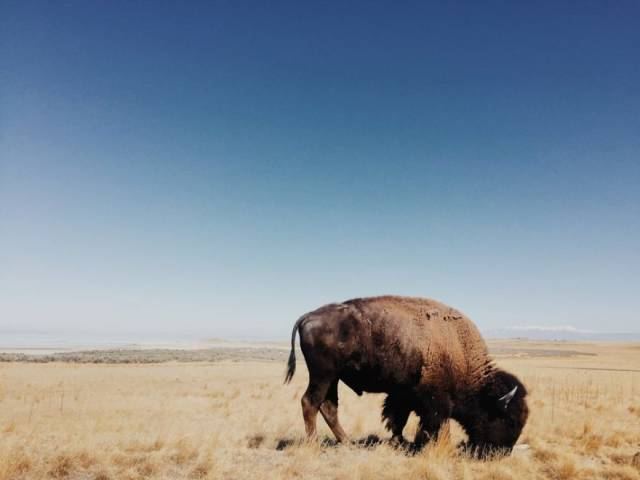 If You Still Think Phone Cameras Are Subpar, Check These iPhone Photography Awards Winners