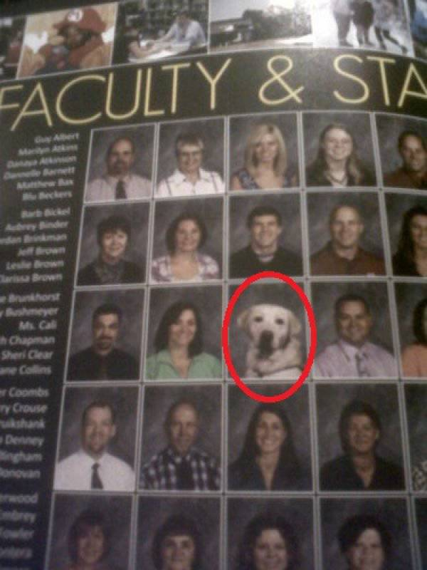 These Dogs Have More Than Deserved Their Places In School Yearbooks