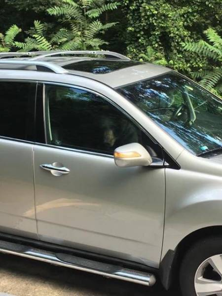 This Black Bear Got Locked In The Car, And You Could Easily Guess What Happened Next…