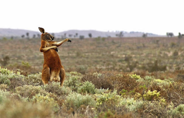 2017 Comedy Wildlife Photography Awards Bring Us The Humor Straight Out Of The Wild