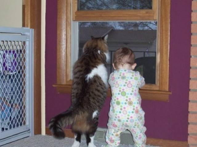 Kids And Pets Get Along So Well Because They're Almost Identical