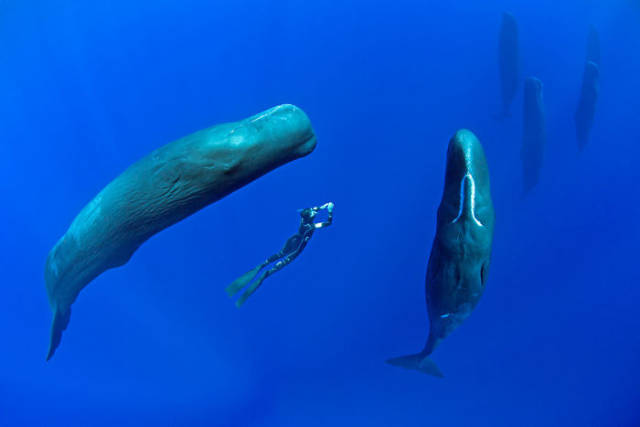 These Pictures Of Sleeping Whales Is A Very Rare Sight To See