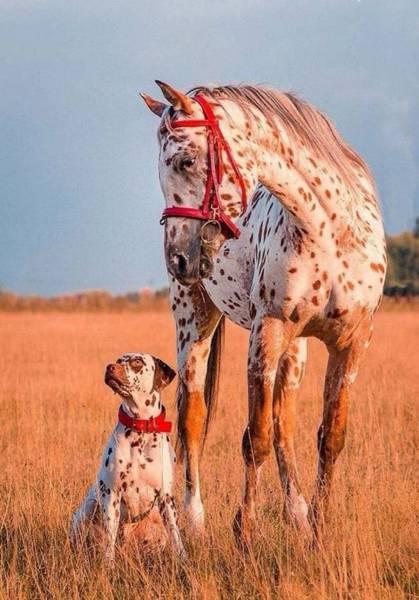 30 imagenes super increibles que nunca podras igualar!