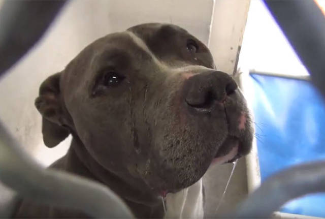 This Dog's Emotions Have Conquered The Hearts All Over The Internet