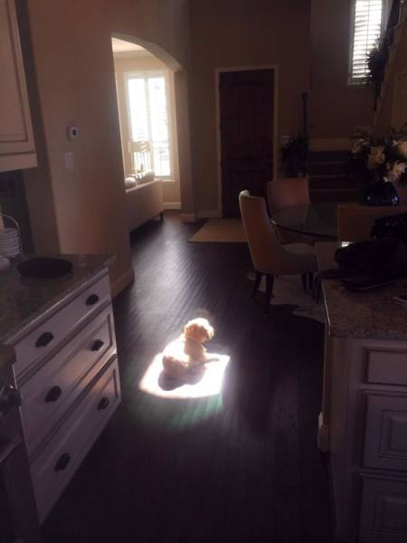 Pets Are Always Ready To Surprise Their Humans – Especially In The Morning
