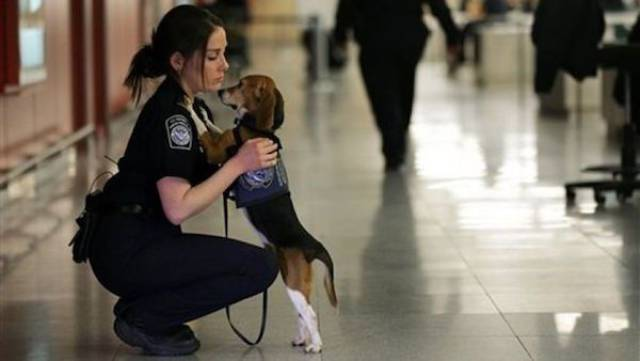 You Should Definitely Know More About K-9 Dogs That Serve Both Faithfully And Cutely