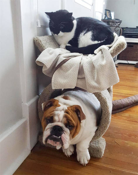 Sometimes Dogs Forget Who They Are And Enjoy Being Cats Instead