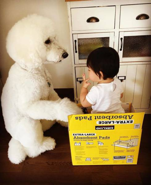 This One-Year-Old Girl And Her Giant Poodle Are The Ultimate Friendship Goal!
