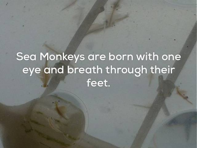 23 Strange Facts That Will Make You Think