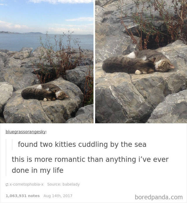Hilarious Cat Posts On Tumblr Will Make Your Day Even Better