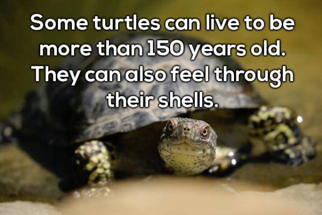 Surprising Animal Facts To Make You Smarter