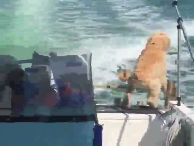 Excited Dog Meets A Dolphin