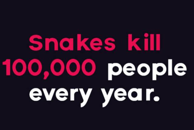 Don't Be Afraid – These Snake Facts Don't Bite