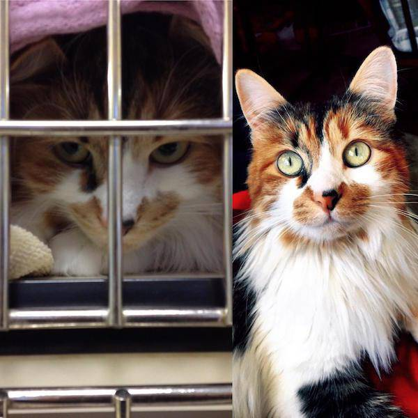 Here's Why All Animals Should Be Adopted!