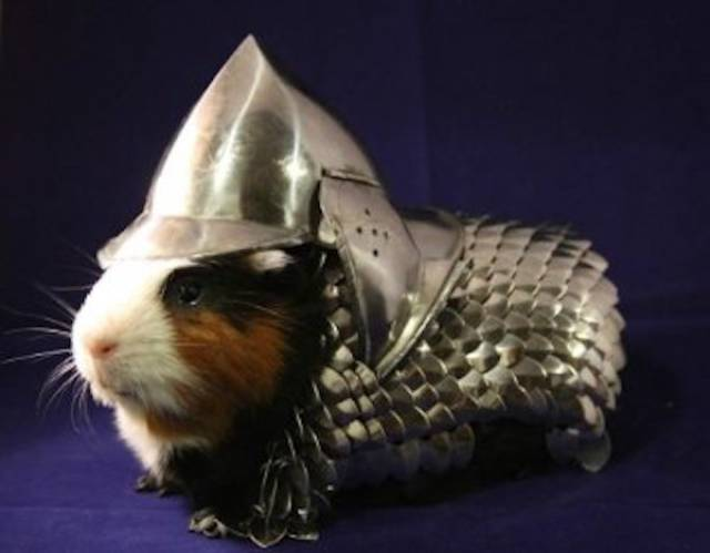 Animals Need To Be Fashionable Too!