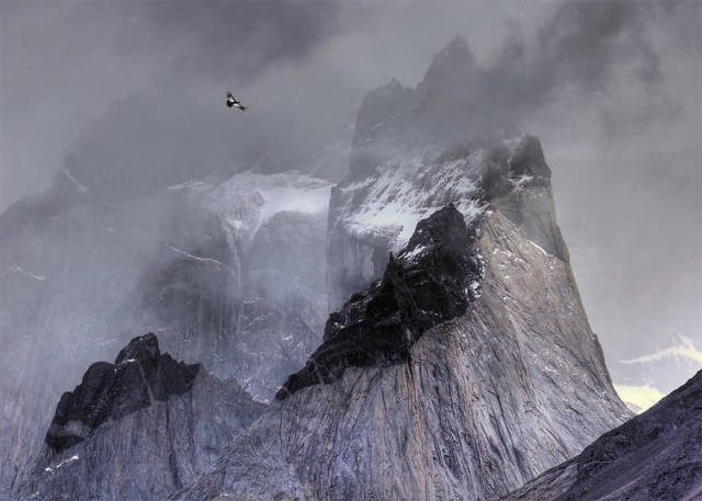 Bird Photographer Of The Year Winners Are Announced And Their Works Are Beautiful!