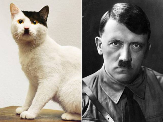 Every Cat Has A Celebrity Doppelganger…