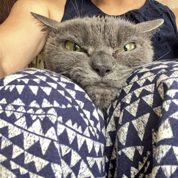This Angry Cat Could Be A Totem Animal For Many People