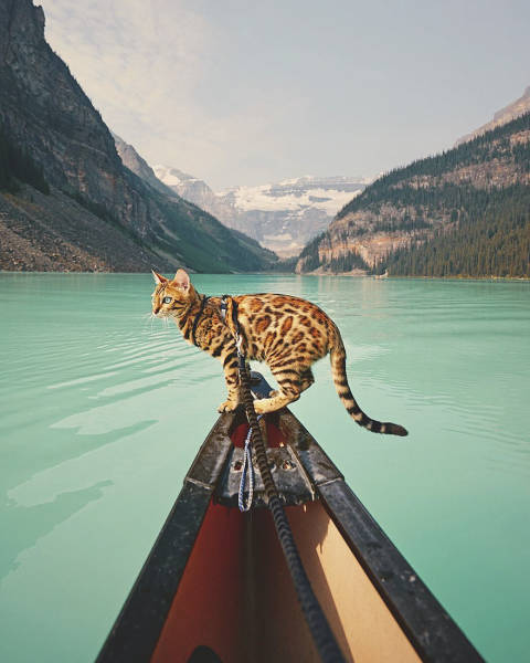 This Kitty Has Traveled More Than You Have!