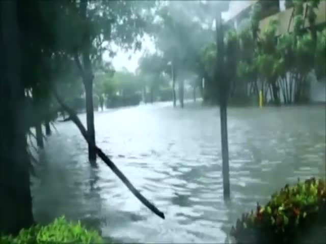 Hurricane Irma Brought Some Unexpected Guests To Miami Streets…