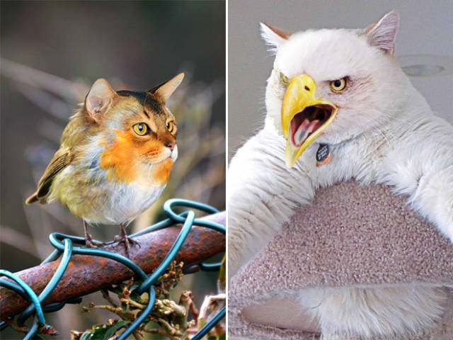 Cats And Birds Are A Perfect Combination!