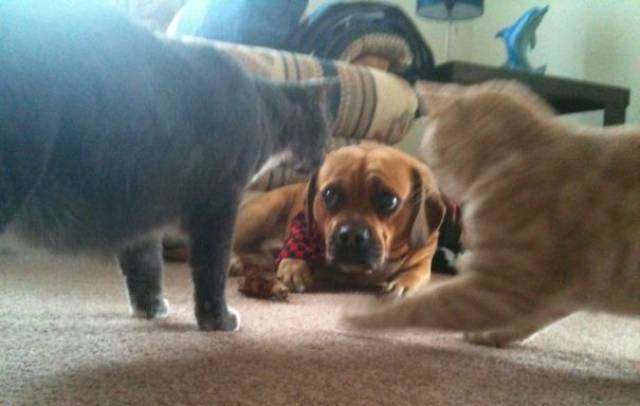 Dog-Cat Relationships Are Very Complicated…