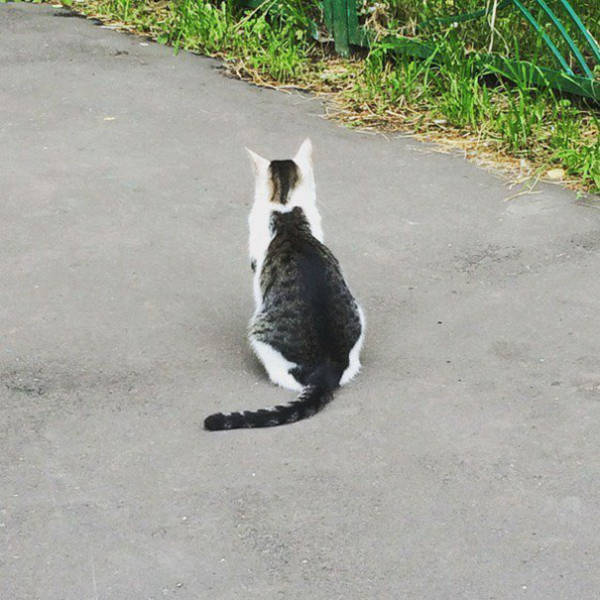 Cats Like Being Different Too